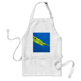 longhorn-cowfish adult apron