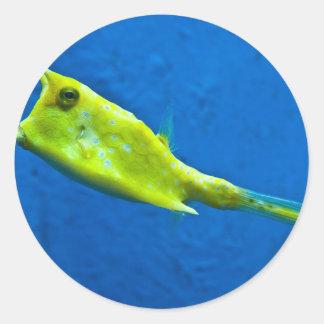 longhorn-cowfish classic round sticker