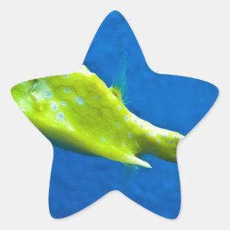 longhorn-cowfish star sticker