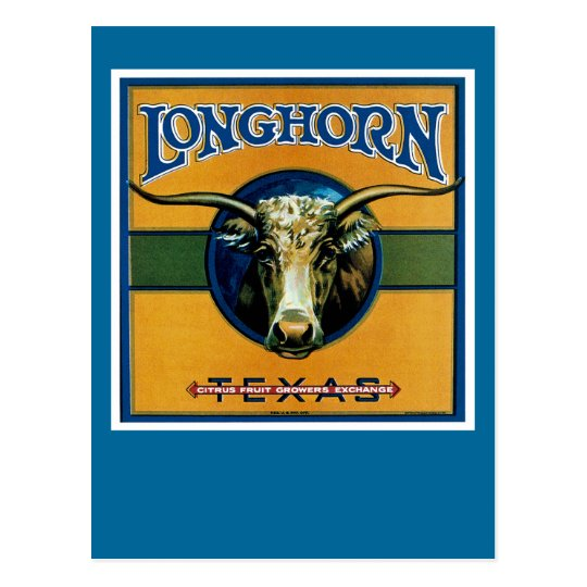 Longhorn Texas Postcard