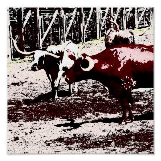 Longhorns at the Stockyards Poster