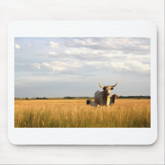 Longhorns on the open range mouse pad