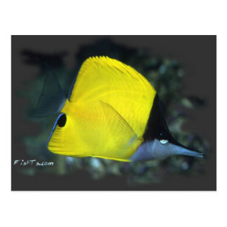 Longnose Butterfly Fish Postcard