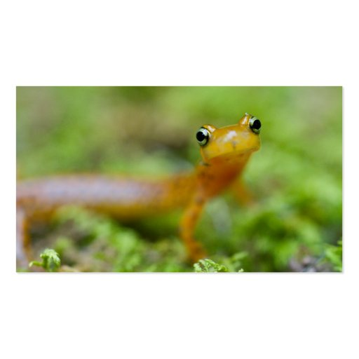 Longtail Salamander Double-Sided Standard Business Cards (Pack Of 100)