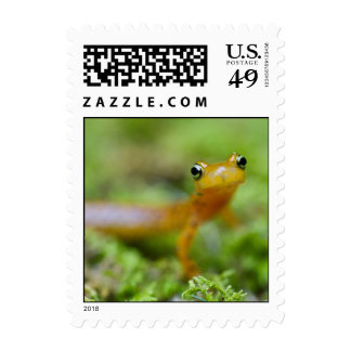 Longtail Salamander Postage Stamps