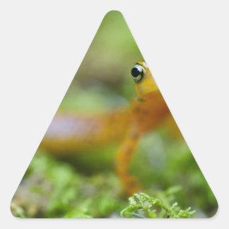 Longtail Salamander Triangle Sticker