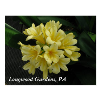 Longwood Gardens, PA Postcard