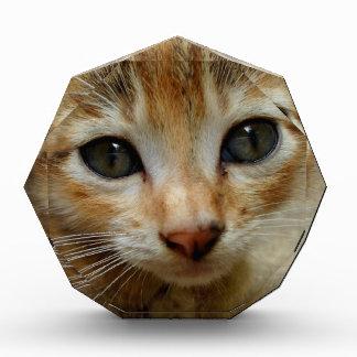 Look at me! Sweet tigered Kitten Award