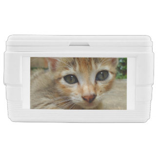 Look at me! Sweet tigered Kitten Chest Cooler