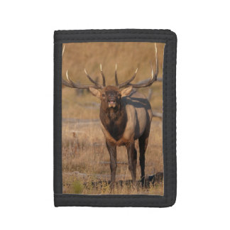 Look at Me Trifold Wallets