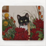 Look at that cute cat. mousepad