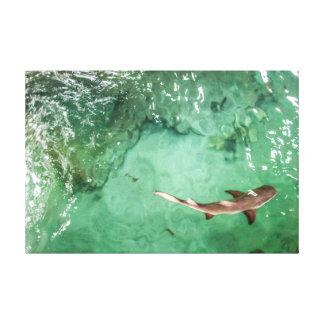 Look at the Shark - Canvas Print