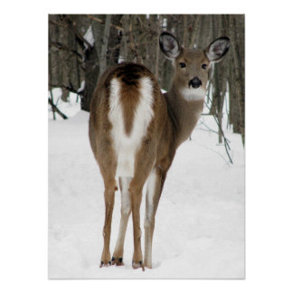 look back, deer poster