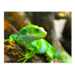 Look  for love and joy iguana lizard reptile postcards