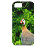 Look forward to love and joy guinea fowl guadeloup iPhone 5 cases