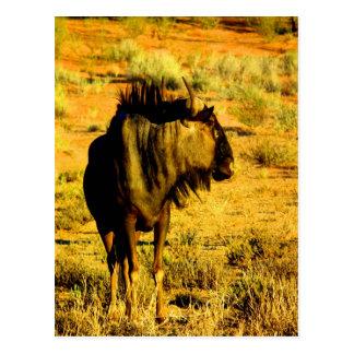 Look forward to my love blue wildebeest antelope postcard