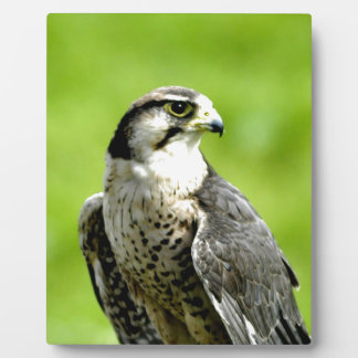 Look forward to peace and love bird falk gyr plaques