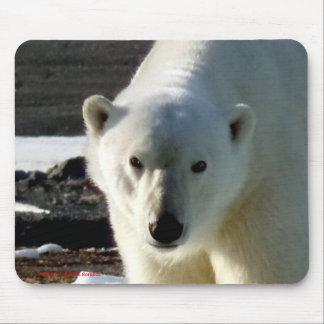 Look into the eyes of a wild Polar bear Mouse Pad