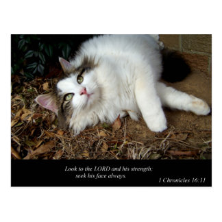 Look to the Lord (Cat) Postcard