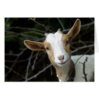 """""""Look Who it is! A Goat"""" Card"""