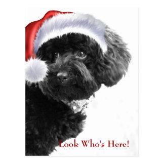 Look Who's Here/Holiday Custom Postcard