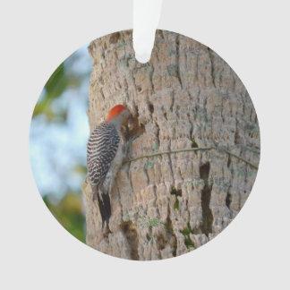lookin dirigido rojo del pájaro de la pulsación de