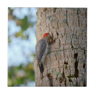 lookin dirigido rojo del pájaro de la pulsación de azulejo cuadrado pequeño
