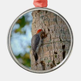 lookin dirigido rojo del pájaro de la pulsación de adorno redondo plateado