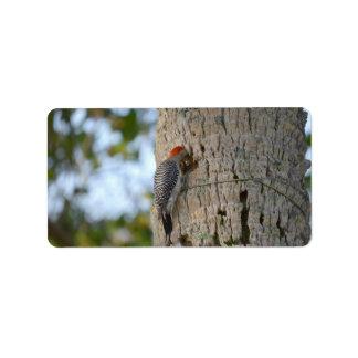 lookin dirigido rojo del pájaro de la pulsación de etiquetas de dirección