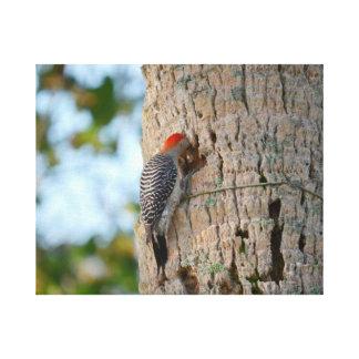lookin dirigido rojo del pájaro de la pulsación de impresión en lona estirada
