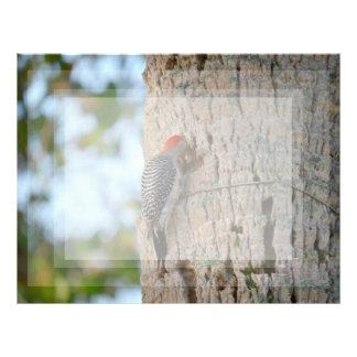 lookin dirigido rojo del pájaro de la pulsación de membretes personalizados