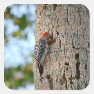lookin dirigido rojo del pájaro de la pulsación de pegatina cuadrada