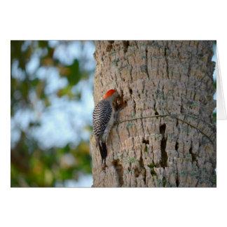 lookin dirigido rojo del pájaro de la pulsación de tarjeta pequeña
