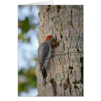 lookin dirigido rojo del pájaro de la pulsación de tarjeta de felicitación