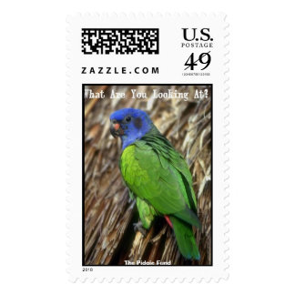 Looking at parrot, The Pidgie Fund Postage Stamps