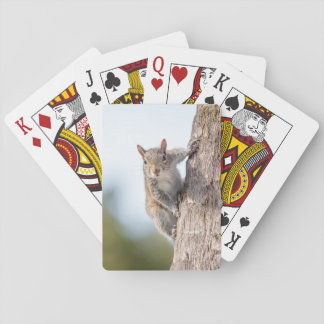 Looking at You! Squirrel Playing Cards