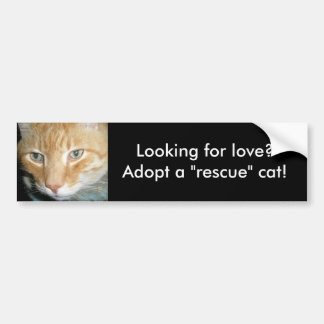 Looking for love?Adopt a Rescue Cat Bumper Sticker