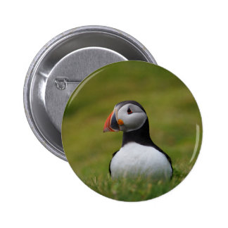 Looking for the Burrow Puffin Pinback Button