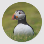 Looking for the Burrow Puffin Round Sticker