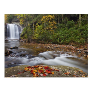 Looking Glass Falls in the Pisgah National Postcard