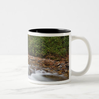 Looking Glass Falls in the Pisgah National Two-Tone Coffee Mug