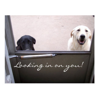 Looking in on you! postcard