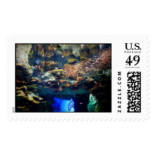 Looking In Postage Stamp