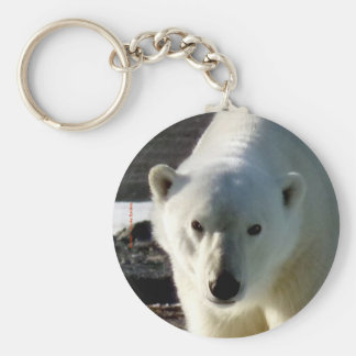 Looking into the eye of a Polar bear Basic Round Button Keychain