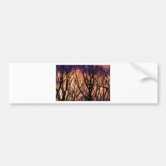 Looking Into The Forest Light Bumper Sticker