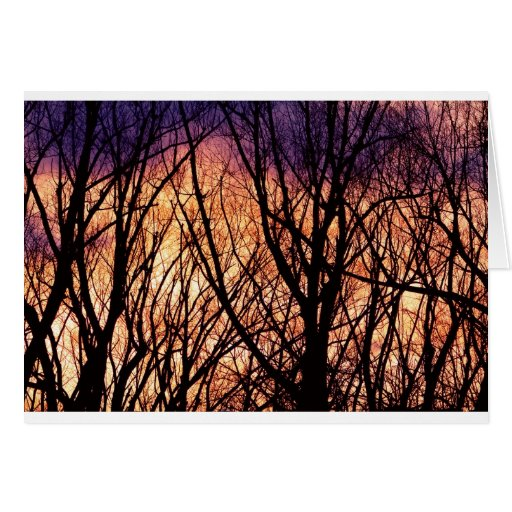 Looking Into The Forest Light Greeting Card