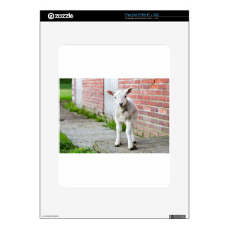 Looking lamb stands near brick wall decal for iPad