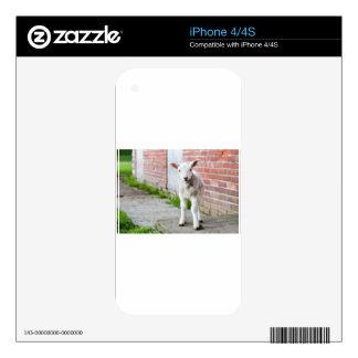 Looking lamb stands near brick wall iPhone 4 skins