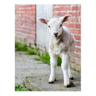 Looking lamb stands near brick wall postcard