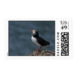 Looking Out to Sea Puffin Postage